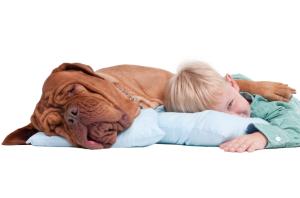 Boy with a dog on the floor