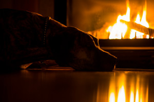 A brindle Great Dane is laying on a floor next to a fire place. The dog is highlighted by the warm light of the flame.